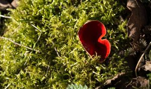 Red Cup on Moss by Danimatie