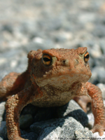 toad by finepix-at