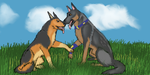 Che and Melrose Breeding Picture by Sabre-k9CORPS