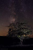 Tree under the starry sky by Viand
