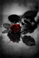 Red gothic Rose by Ashayaa