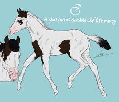 Foal A short part of chocolate chip X No Mercy by RisingAngelss