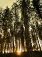 Morning Woods by KariLiimatainen