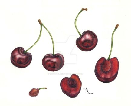 Cherry Study by RuthALawrence