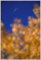 Leaves and Moon no. 1 by shagie