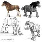 Clydesdale Study by Piratter