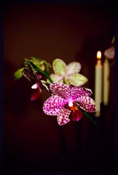 orchidee by DelRivo