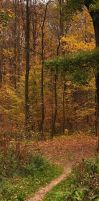 Foret en automne 3 by yuushi01