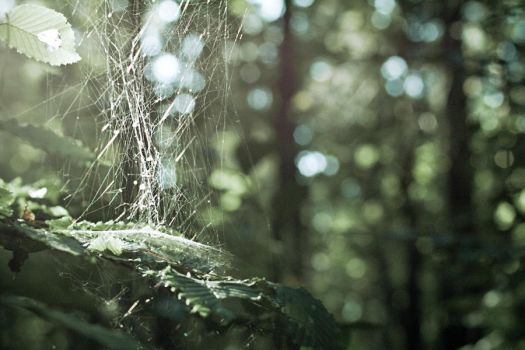 Deep Forest by Robakh