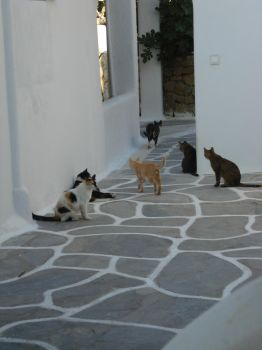 CATS .....MYKONOS by pgsrunner