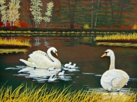 Swan Family by RandyAinsworth