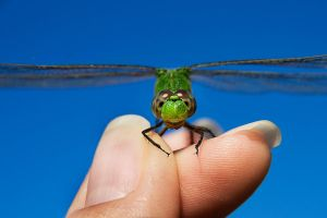 The Green Dragonfly 09 by lifeinedit