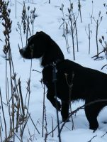 Little black dog in the snow by UndertakerisEpic