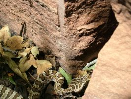 snake1 by todds201