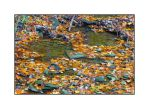Creek leaves.L1030724, with story by harrietsfriend
