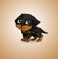 Puppy Dachshund mix by kkcooly