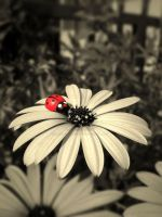 ladybug by purplerainistaken