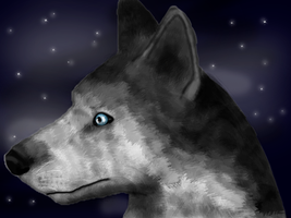 Sibirian husky by Speck--Of--Dust