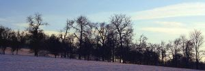 winter by cloe-patra