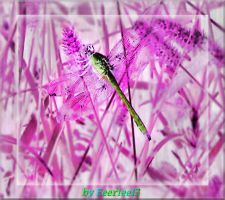 Nature's X-Ray by Feeriee13