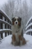 Aussie in the snow by lindaatje