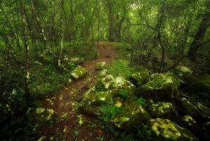 Fairy Land by carlosthe
