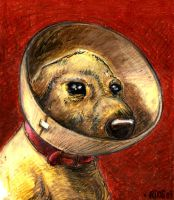 Doggy with a Cone Oil Pastel by deaddays