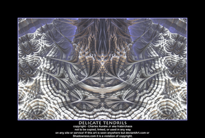 delicate tendrils by fraterchaos