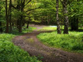 Woodland Lane by jenny4