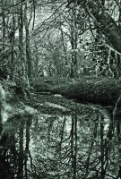 Woodland reflection by AndyCronshaw