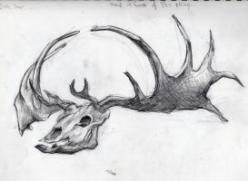 Irish Elk Skull by graven-images-426