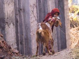 The Stubborn Goat by InayatShah