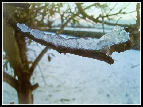 Ice on the branch by LoRdaNdRe