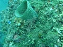 ROPanama Research: Sea Sponge by Namyr