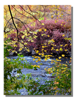 Leaves Veil Provo River by WillFactorMedia