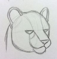 Puma Head Structure by mashaheart