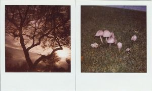suburban nature by ruthey