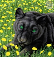 Panther in dandelions by Kivuli