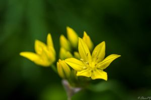 Yellow on Green by StainXY