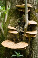 Funghi on a Tree stock by superlibbie