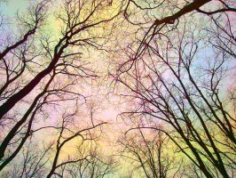 Coloured Branches by MargoBordo