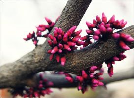 Tiny Pink Buds by GrotesqueDarling13