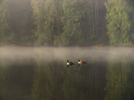 Foggy Morning 2 by Violet-Kleinert