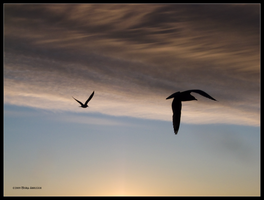 Silhouette 2 Gulls by Mogrianne