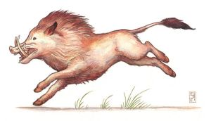 Running Boar by emla