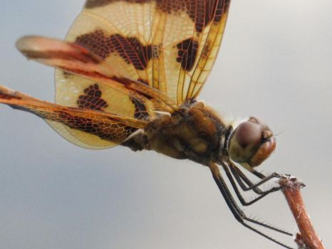 Halloween Pennant 4 by Windthin