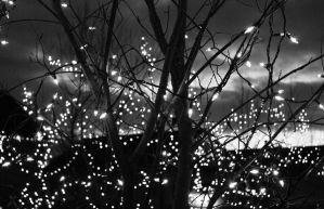 Christmas Lights by TRLPhotos