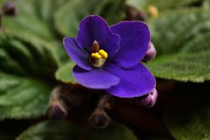 First Flower of My Violet by TeKNoMaNiaCH