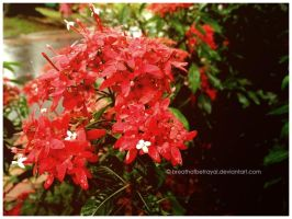 Red-ish Plant Flowers. by breathofbetrayal