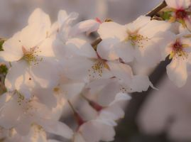 Spring for you 2 by oya-g